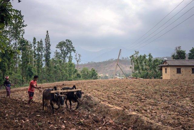 Hombre cultivando en zona rural de Siria