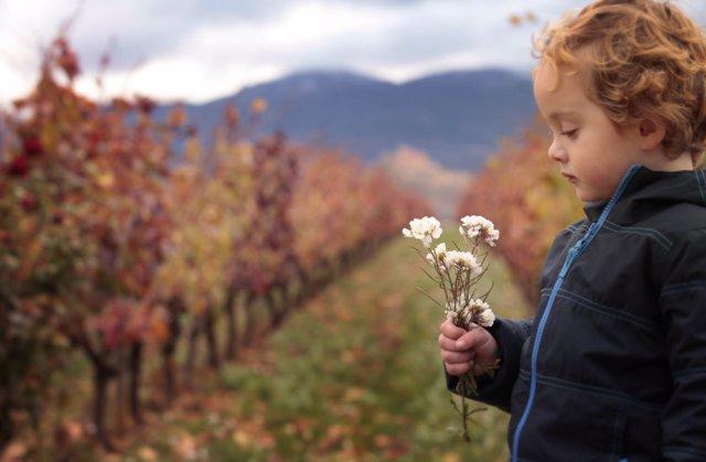Niño en el viñedo de Vivancos