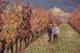 Sentir el viñedo, el mejor viaje con niños