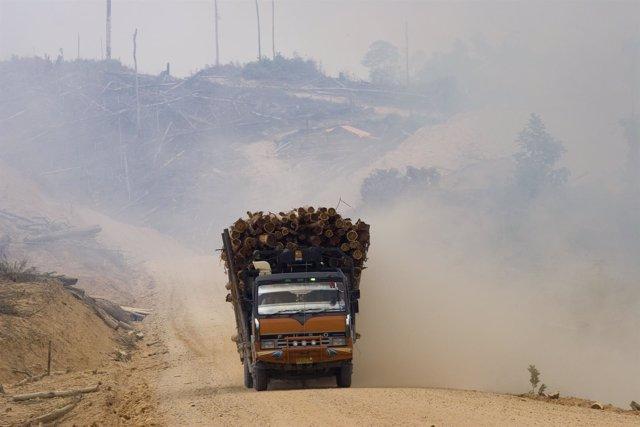 Deforestación En Indonesia