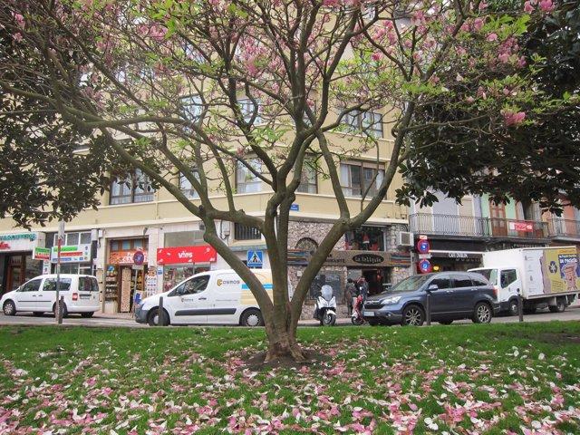 Primavera, árbol en Santander