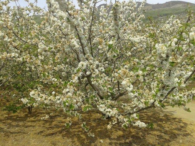 Valle del Jerte, primavera, bien tiempo, calor