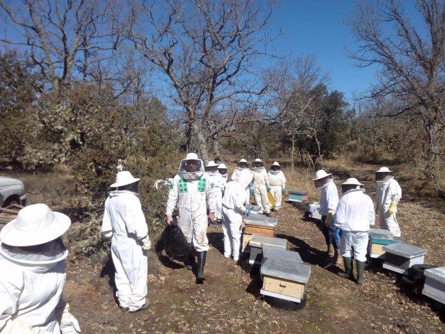 Unos apicultores en la primera cata a las colmenas