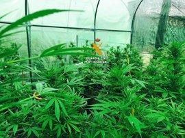 Detienen a dos personas acusadas de cultivar y elaborar marihuana en Pizarra