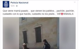 La Policía Nacional conquista las redes sociales al escoltar a una familia de patos
