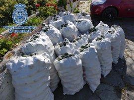 La Policía Nacional evita el robo de 1.400 kilos de aguacates en una finca de Los Realejos (Tenerife)