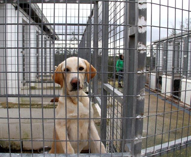 Perro en el refugio provincial de la Diputación.
