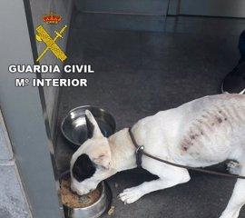 Investigan a una persona en Gran Canaria por maltratar a un perro