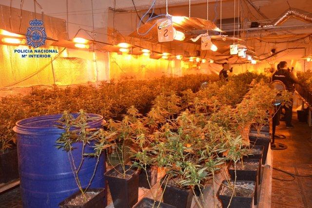 Los agentes se han incautado de 400 plantas