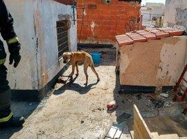 Rescatan a un perro encadenado y sin comida de la azotea abandonada en Almería