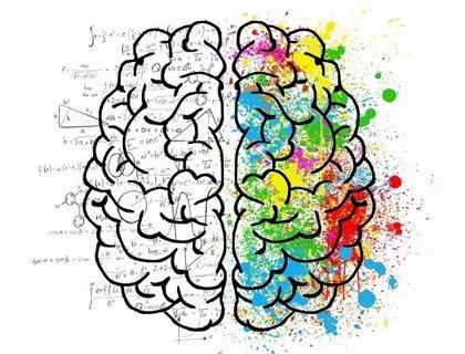 Identifican un circuito cerebral necesario para la formación de la memoria