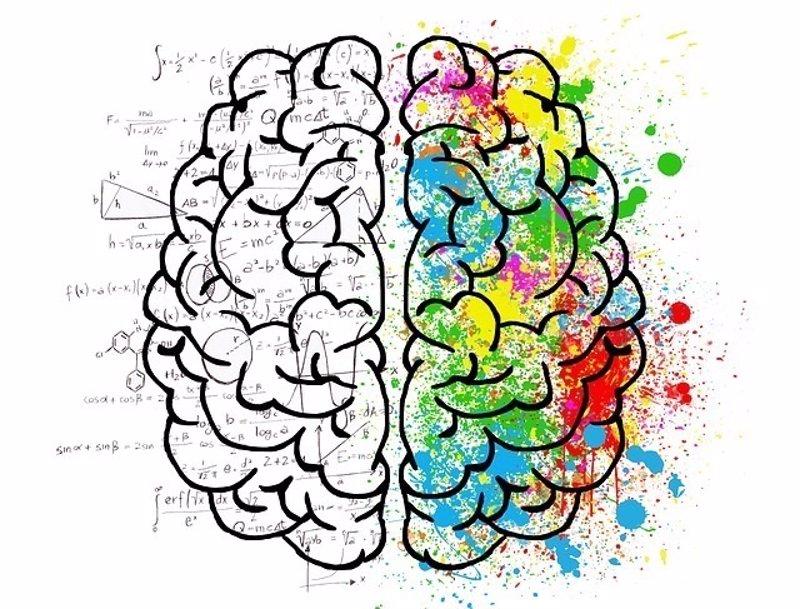 Identifican un circuito cerebral necesario para la formación de la ...