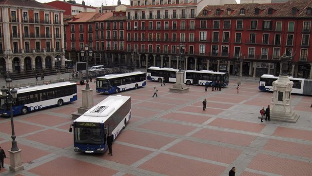 Algunos de los nuevos autobuses de Auvasa, en la Plaza Mayor de Valladolid