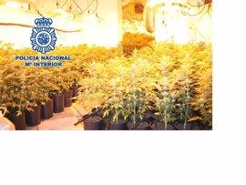 Detenidos en Andalucía 39 miembros de una trama de tráfico internacional de marihuana