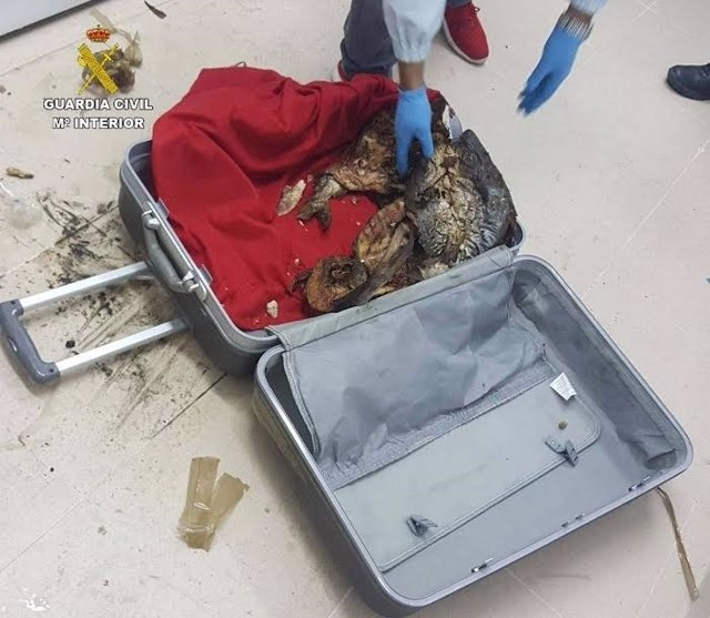 Pescado hallado en maletas en el ferry a Islas Canarias.