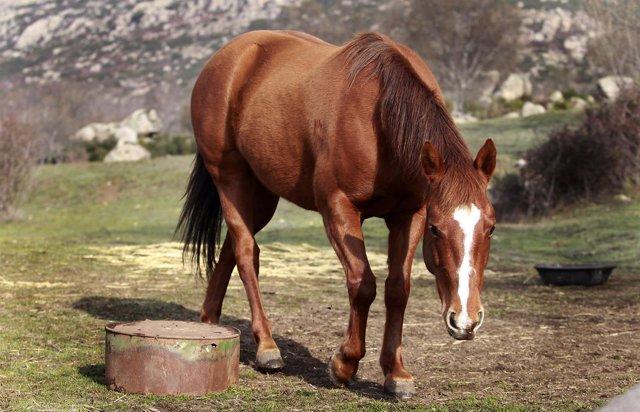 Animal, animales, caballo, caballos, pastar, pasto, pastando, campo