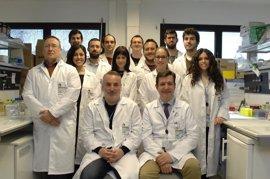 Imibic, Universidad de Córdoba y Reina Sofía exploran nuevos fármacos híbridos para tratar tumores intracraneales