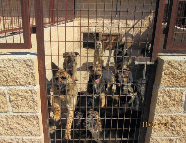 Imagen de los perros rescatados