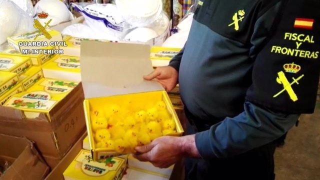 La Guardia Civil interviene 15.000 juguetes de monas de Pascua
