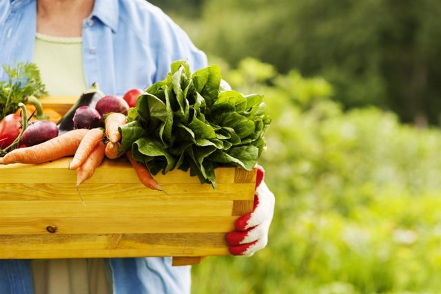 Alimentación saludable, huerto