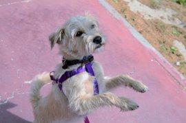 L'Hospitalet de Llobregat interpone 149 denuncias a propietarios de perros por infracciones