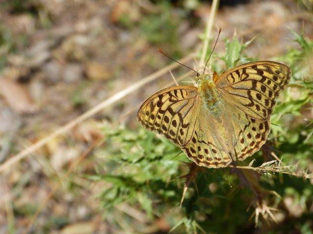 Mariposa, primavera