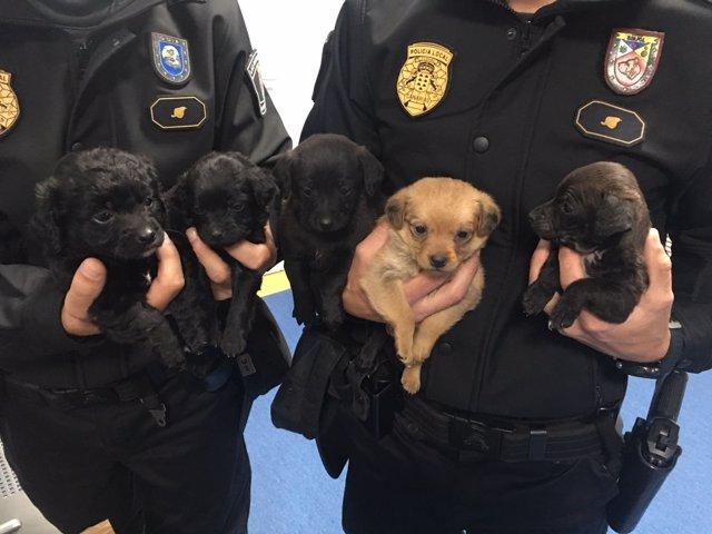 Cachorros recuperados por la Policía Local