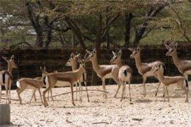 El Gobierno está satisfecho con el grado de cumplimiento de la normativa por parte de los zoológicos españoles