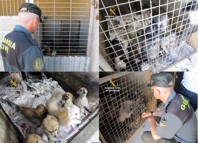 Localizan a más de 150 perros y gatos hacinados en unas instalaciones