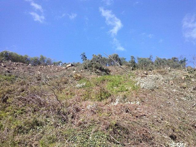 Madera de eucalipto