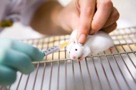 Consiguen ralentizar la progresión de la ataxia, en ratones
