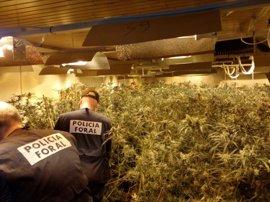 La Policía Foral interviene 2.256 plantas de marihuana en Orkoien