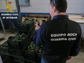 Un detenido y un investigado por comprar 400 kilos de aguacate de origen ilícito en Sagunto