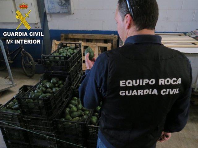 Aguacates de la operación 'Guacamole'