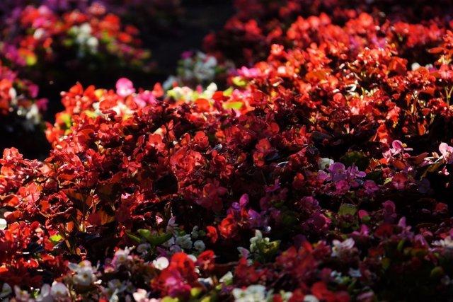 Imagen de uno de los parques con esculturas florales y jardines verticales