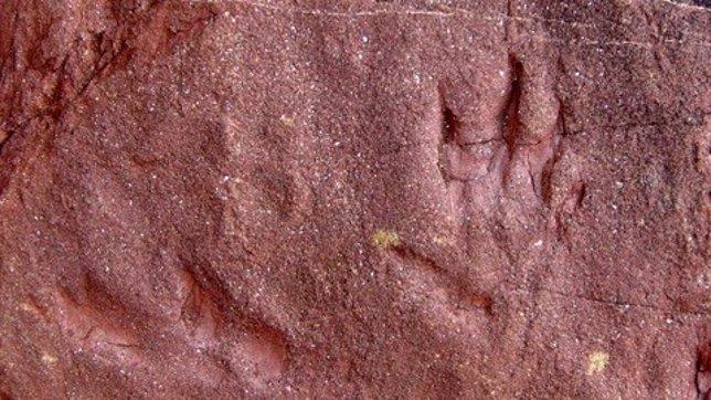 Pisada de reptil fósil desconocido