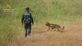 Un perro de la Guardia Civil localiza a un desaparecido desde el martes en Alcalá del Río