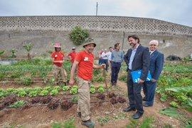 El Cabildo de Tenerife destina 300.000 euros para preparar a personas desempleadas en agricultura ecológica