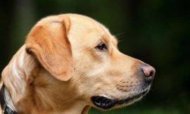 Más de 700 perros en la 38 edición de la Exposición Internacional Canina de Gipuzkoa