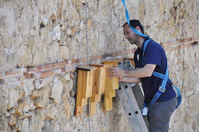 Colocación de cajas de murciélagos en el río Turia
