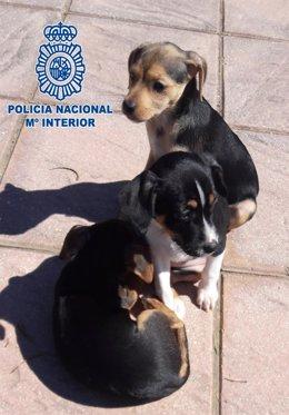 Un detenido por abandono de tres cachorros