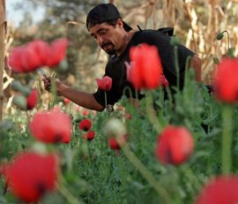 EEUU ofrece a México financiar su lucha contra los cultivos ilegales de amapola