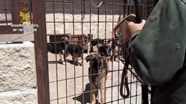 Guardia Civil interviene una instalación con 59 perros en pésimas condiciones en San Sebastián de los Reyes
