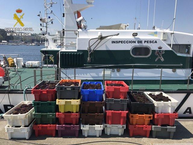 Erizo decomisado en A Coruña