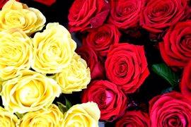 Los floristas prevén vender seis millones de rosas en Sant Jordi
