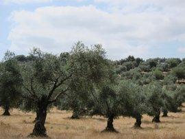 El polen del olivo llega a nivel alto por primera vez esta temporada en Jaén