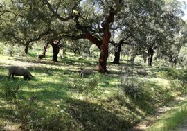 """Extremadura reitera la """"necesidad"""" de una PAC que frene la despoblación en el mundo rural y fomente el empleo"""