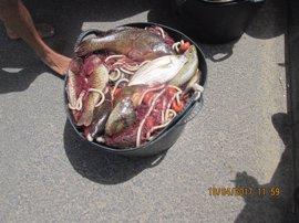 La Policía Local de Teguise (Lanzarote) se incauta de 50 kilos de pescado capturado ilegalmente