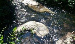 Identificadas las personas que arrojaron cadáveres de ovejas en río Trabe