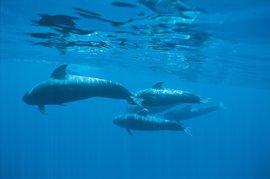 WWF entrega en el Congreso 52.000 firmas que piden la creación del Santuario de Cetáceos en Canarias